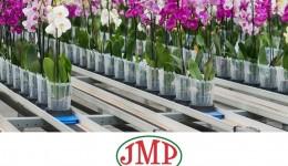 Упаковщик цветов/Теплица JMP Flowers/жилье