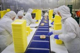 Работа на курином заводе