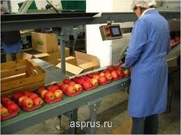 Разнорабочий, сортировщик, упаковщик яблок