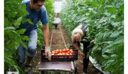 Рабочие в теплицу(можно из Украины)