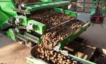 Сортировка картофеля (карантин бесплатно)