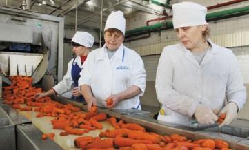 Изготовление овощной консервации (карантин беспл)