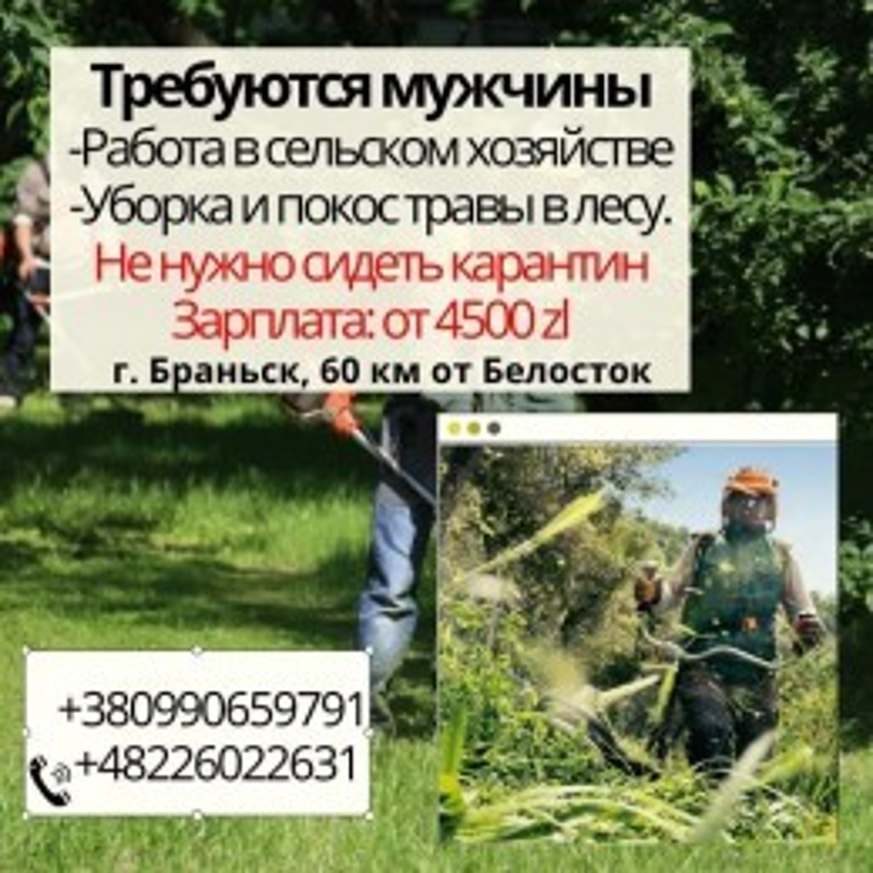Покос травы, в сельском хозяйстве