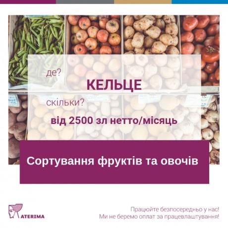 Сортування фруктів та овочів,2500 - 3400 зл,Кельце